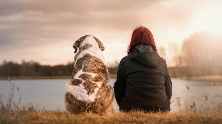 Criterios para otorgar la custodia de una mascota