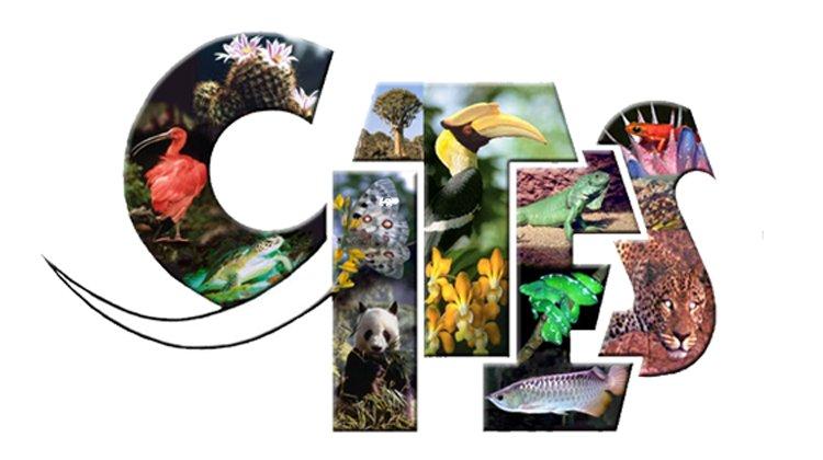 Aprobados los requisitos de documentación, tenencia y marcado de especies protegidas por CITES