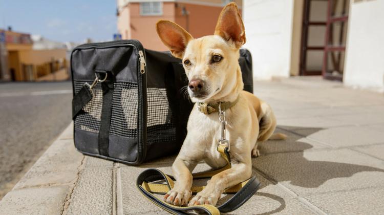 viajar con mascotas - diario juridico