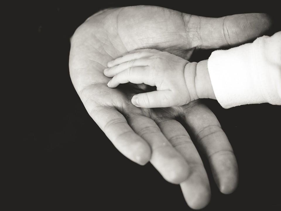 paternidad - diario juridico