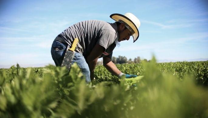 Reclama México a EU violaciones a derechos laborales de trabajadores mexicanos