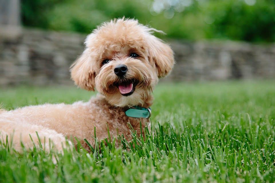 perro - diario juridico