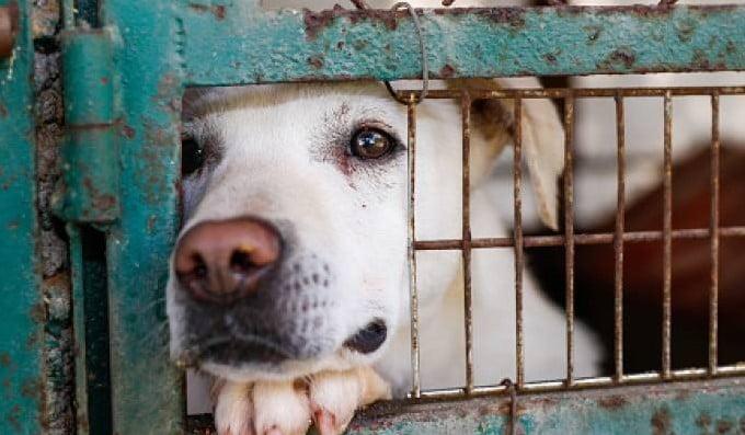 México - Proponen prisión para quienes provoque la muerte de animales