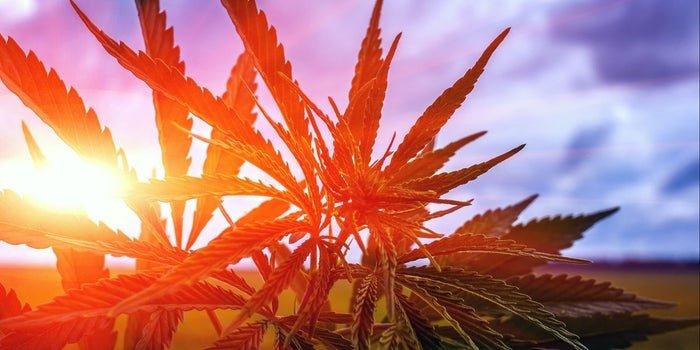 méxico-la-regulación-del-cannabis-no-será-apresurada